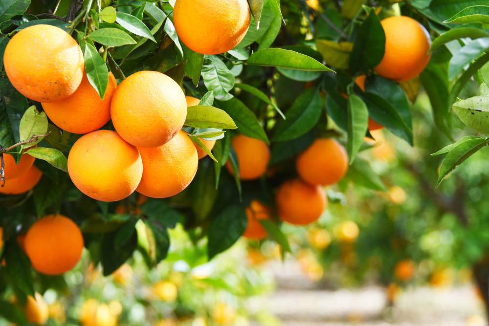 La naranja, la fruta favorita de tu organismo