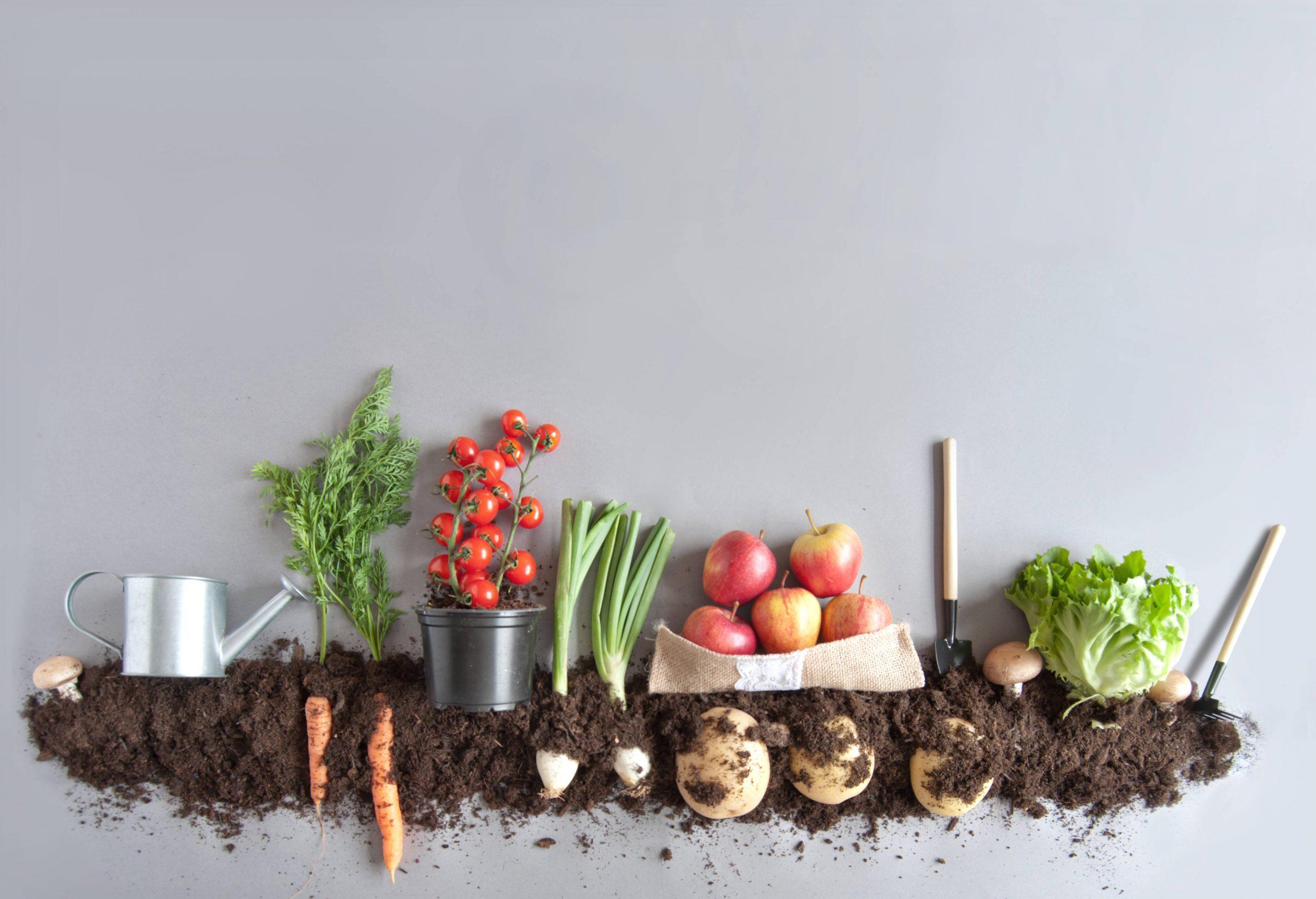 Crecen los cultivos particulares