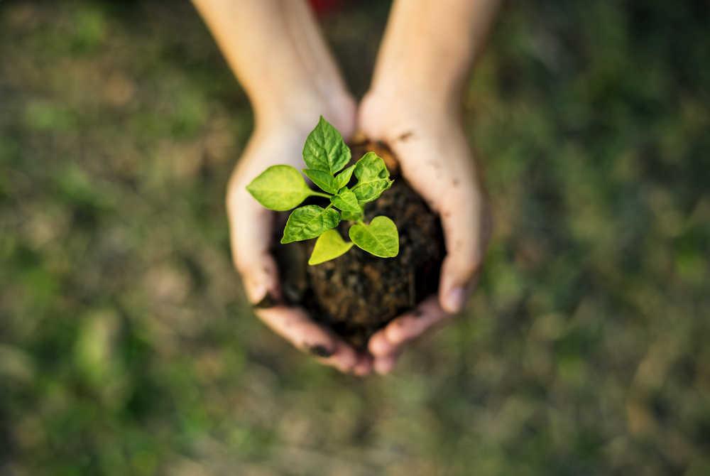 5 ideas para preservar el medio ambiente desde casa
