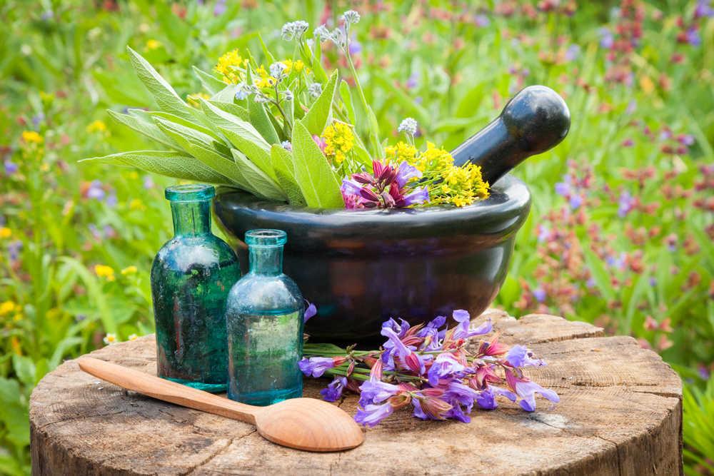 Extractos botánicos para mejorar la calidad de vida